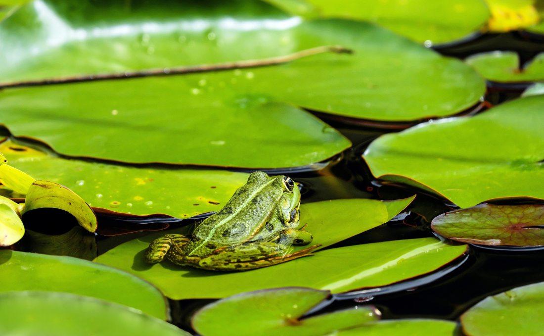 amphibian-animal-flora-122430